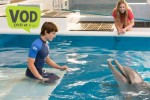 dolphin-tale-2-VOD